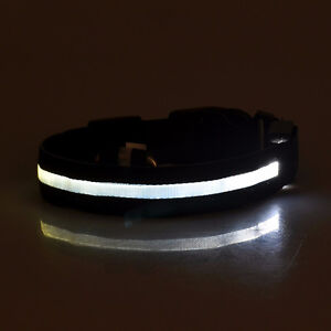 Dog Collar, With  Dazzling  Rechargeable LED LIGHTS !!!