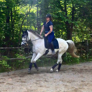 Budget-friendly dressage horse