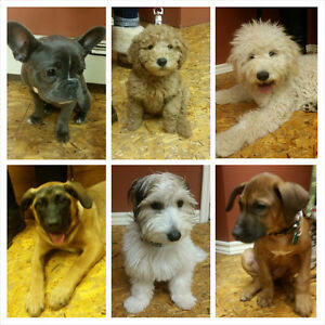 The Best Puppy Class for your dog!