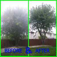TREE TRIMMING/CUTTING/HAULING SERVICE CALL/TEXT 204-451-7751