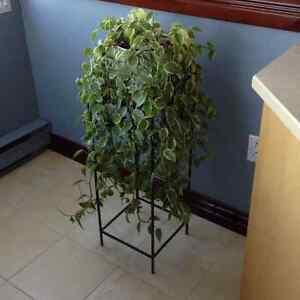Plante d'intérieur + socle en métasl