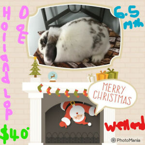 4 GORGEOUS RABBITS!   1 SOLD