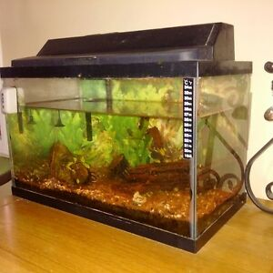 aquarium- tank and accessories