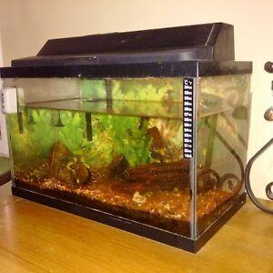 aquarium- tank and accessories