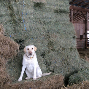 Hay for sale ~ Grass/Alfalfa