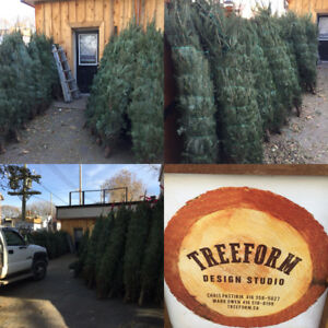 CHRISTMAS trees in Leslieville - 15% off coupon w Purchase