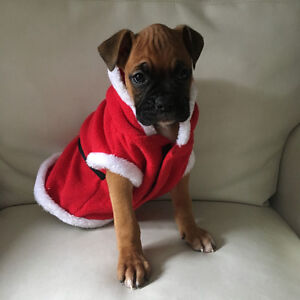 Purebred Boxer Puppies *2 Pups Left!!