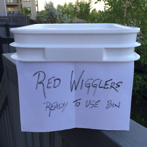 Red Wiggler Worms-Compost Household Garbage- From Earth To Earth Edmonton Edmonton Area image 5