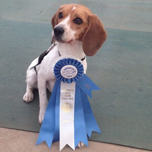 Puppy Class/ Obedience Class/ Behaviour Consults Kitchener / Waterloo Kitchener Area image 2