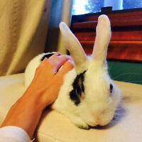 Rabbit looking for new home!