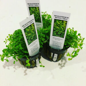 Get a Free Live Plant When You Order at Aquascaperoom