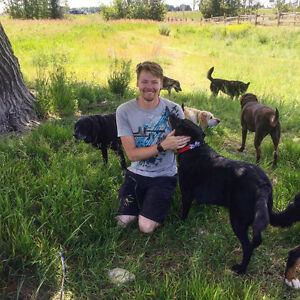 Experienced Dog Walker In Canyon Meadows