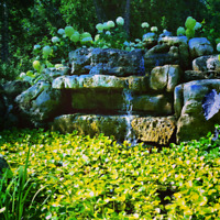 Pond services/ spring cleaning/ repairs/ installation