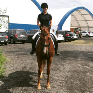Dressage mare for lease in Vars