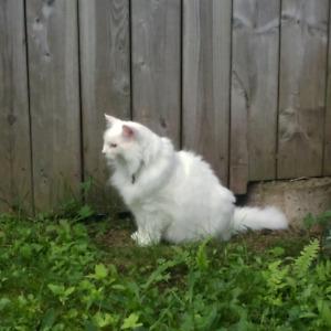 Lost Cat - Creighton st