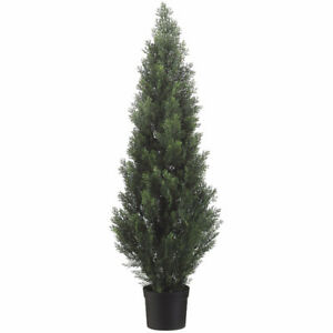 Cedar Tree - wanting to purchase