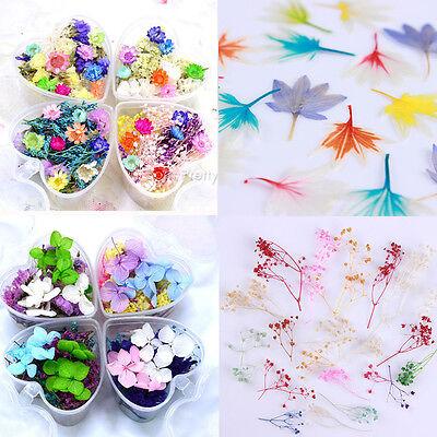 Mixed Dried Flowers 3D Nail Art DIY Bottle Decoration Flower Manicure Tips DIY