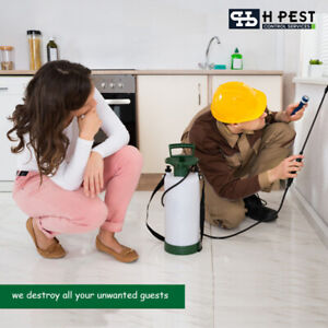 Best Termite Control Services in Hyderabad