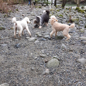 Love and Care Pet Services North Shore Greater Vancouver Area image 4