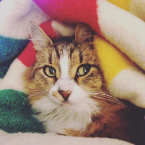 Cat Sitter Wanted in Martin's River Dec 19-27