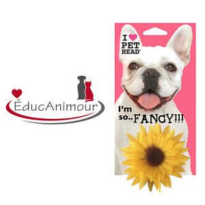 SO FLY! PET HEAD - TOURNESOL pour chien ou chat