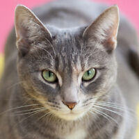 6 year old cat looking for new home