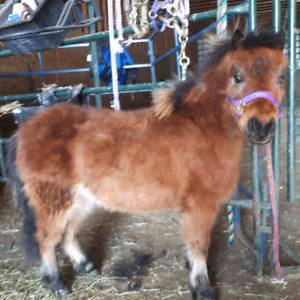 Wonderful Mini Pony