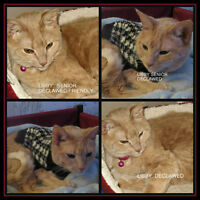 FOSTER OR FOREVER HOME NEEDED FOR DECLAWED SENIOR CAT