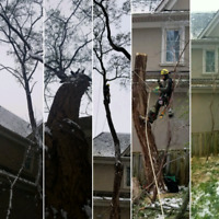 TREE REMOVAL/PRUNING - 24 HR EMERGENCY SERVICES  - 647.390.9223