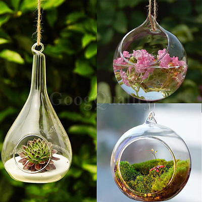 Hanging Glass Flower Planter Ball Vase Container Home Decor