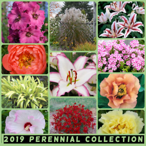 Perennials, peonies, lilies, berries and more