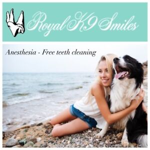 Anesthesia - Free K9 Teeth Cleaning!