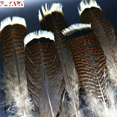12 #1 JUVENILE MERRIAM/'S WILD TURKEY TAIL FEATHERS //FLY-TYING