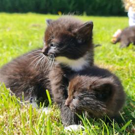 8 lovely kittens