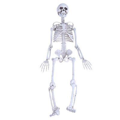 90cm Life Human Anatomical Skeleton Medical Model School Teaching