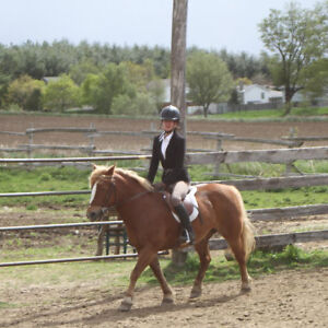 Lovely pony for Riding lessons :) Kitchener / Waterloo Kitchener Area image 2