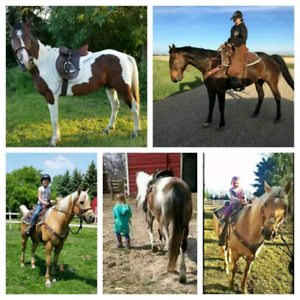 Horse training and Lessons.