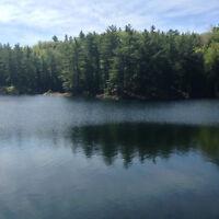 Waterfront property 4 acres / Bord de l'eau 4 acres