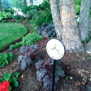 Landscaping and Lawn Maintenance