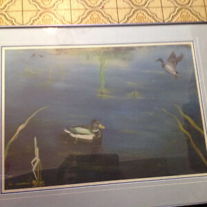 D.j. Brine duck print wildlife 1992  print framed . 25 dollars Kitchener / Waterloo Kitchener Area image 2