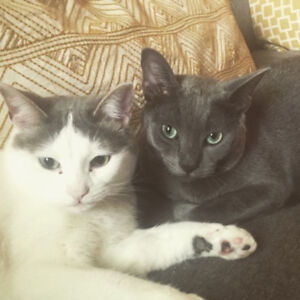Two Cats Looking for a Good Home- no charge