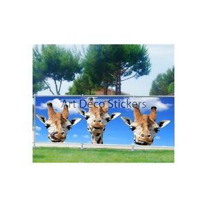 Brise vue, jardin, terrasse, balcon déco Girafes 9113