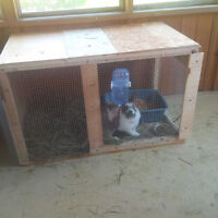 Bunny hut and outdoor cage