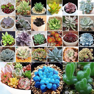 100PCS Four Seasons Mixed Succulents Seeds Decor Potted Plant Home Garden Rare