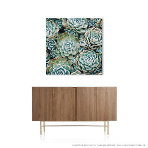 Succulent Wall Art Mounted Under Acrylic
