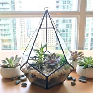 Teardrop Terrarium DIY Kit