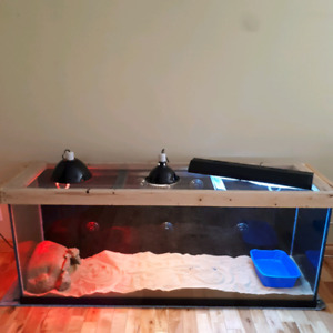 Looking to Rehome Nile Monitor and everything needed 1000