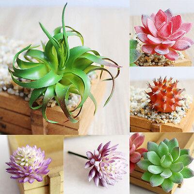 atur Sukkulenten Pflanze Kaktus Echeveria Blume Zuhause Dekor (Kaktus Dekor)