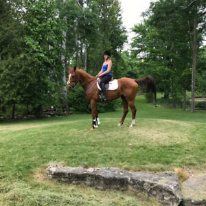 HORSE FOR PARTBOARD LOCATED IN HALTON  HILLS
