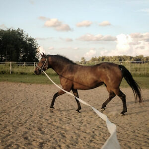 Fancy medium pony for sale